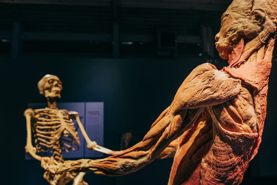 body kiállítás2
